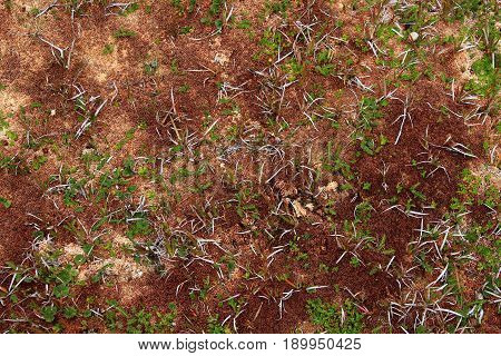 Peat bog plants, used for gardening and the diapers production, Patagonia, Chile