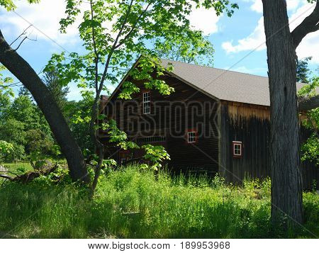 Old wooden barn framed by two oak trees beneath a sunny , early summer day.