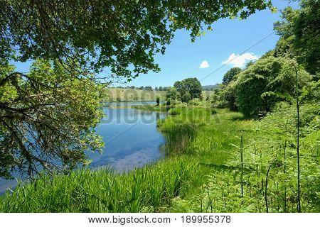 swamp grass of Biviere Lake in Nebrodi Park, Sicily