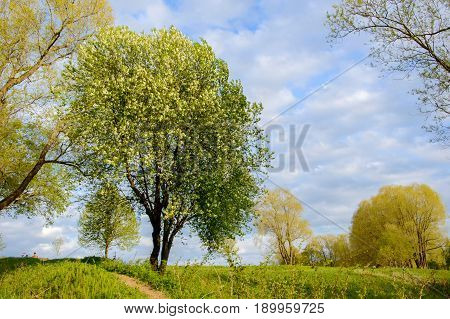 Landscape on a summer Park on a Sunny day. A view of the trees and the lawned hilly terrain.