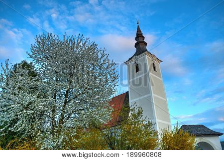 View on white church with bell tower among bloom trees in Seewalchen city. Traditional Europe church architecture. Austrian architecture. Diagonal evening view