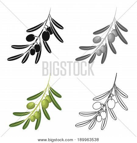 Olive branch.Olives single icon in cartoon style vector symbol stock illustration .