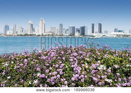 San Diego California Skyline and Harbor View