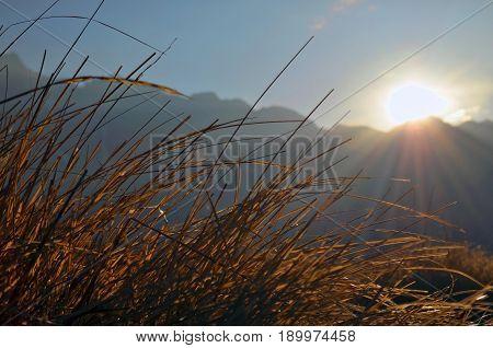 Sunrise in the Himalaya mountains. Grass, close up, sunbean