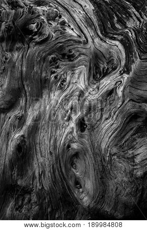 beauty of textures and shapes on the wood