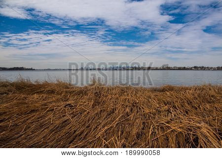 Landscape with dry swamp grass (cattail). Can be use as background