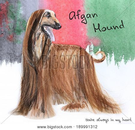 beautiful abstract handmade postcard with Afghan Hound