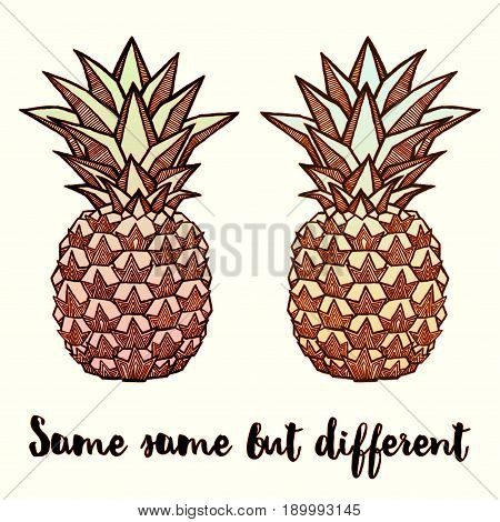 Couple of Fresh Pineapples isolated on white background. Hand-drawn ink vector illustration for t-shirts, banners, posters etc