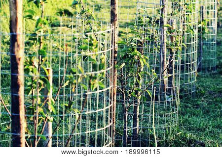 Metal guard mesh protection for animal damaged tree bark .