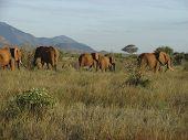 Elephants' migration through an african savanna. Kenyan Mountains and a beautiful sky at the horizon. Tsavo National Park - Kenya 2007. poster
