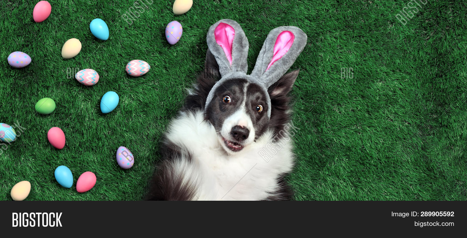 Hy Dog Bunny Ears Image Photo
