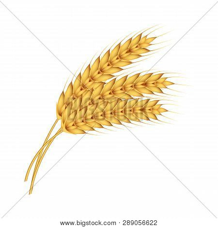 Natural Wheat Icon. Realistic Illustration Of Natural Wheat Icon For Web Design Isolated On White Ba