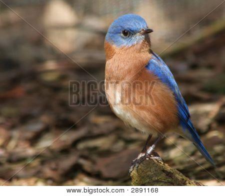 Blue So Proud
