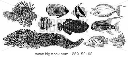 Decorative Fish And Coral Isolated Big Set. Spotted Moray Eel, Zebra Fish, Fish Surgeon, Butterfly.