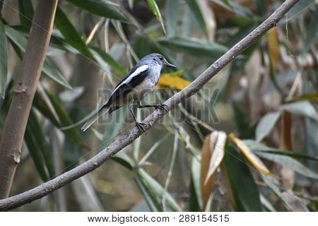 The Old World Flycatchers Birds Are A Large Family, The Muscicapidae, Of Small Passerine Birds Mostl