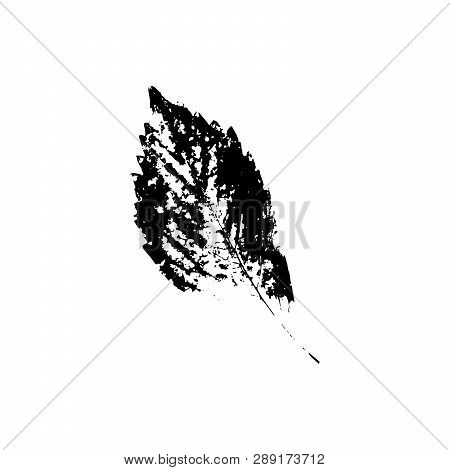 Black Silhouette With Leaf Of Tree. Single Isolated Clipart. Prints Of Leaves On Branch. Flora And N