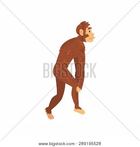 Australopithecus, Biology Human Evolution Stage, Evolutionary Process Of Woman Vector Illustration