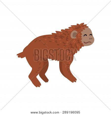 Ape, Monkey Animal Progress Stage, Evolutionary Process Of Woman Vector Illustration