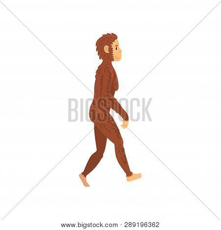 Female Homo Erectus, Biology Human Evolution Stage, Evolutionary Process Of Woman Vector Illustratio