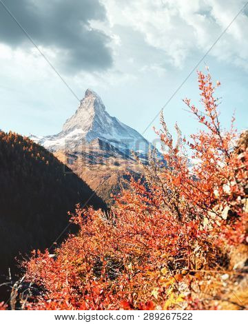 Incredible colorful landscape with Matterhorn Cervino peak and red flowers bush in Swiss Alps