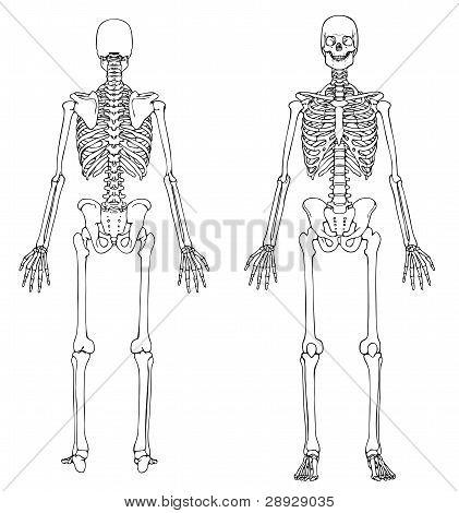 Skeleton Front Back.eps