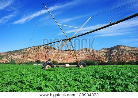 Pivot irrigation system in a potato field