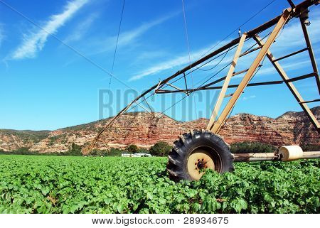 Irrigation system in a potato field