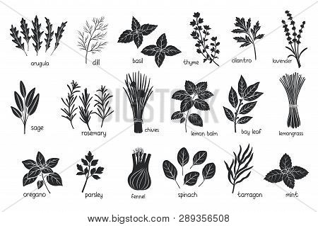 Black Herbs Spices Silhouettes. Popular Culinary Herbs, Stamp Print Vector Illustration. Bay Leaf, L