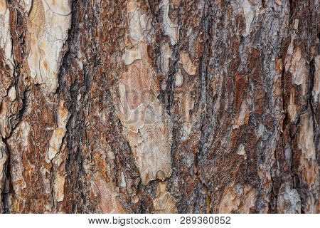 Brown Wooden Texture Of Pieces Of Bark On A Pine Tree