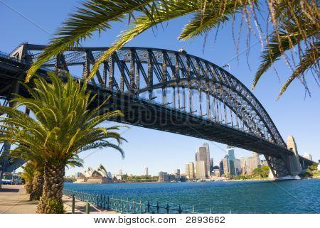 Sydney Harbour Bridge Palm Trees