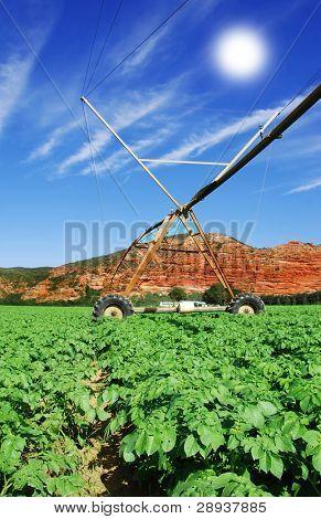 a Modern irrigation system in a potato field