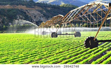 Modern irrigation system watering a farm field of carrots in late afternoon sunlight
