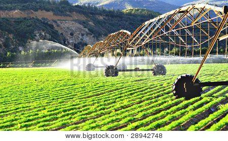 Moderne irrigatiesysteem een boerderij veld met wortelen in de late middag zon drenken