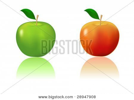 Green and red apple. Gradient mesh