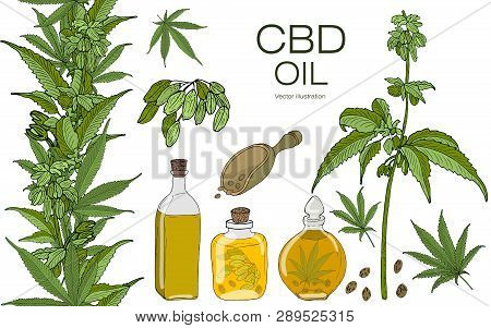 Vector Color Set Of Hand Drawn Hemp Elements. Cannabis Essential Oil.cbd. Oil Bottles, Branches, Lea
