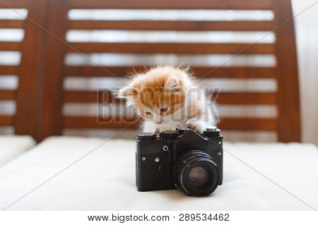 Little Adorable Sunny Fluffy Cute Ginger Cat Plays With A Vintage Camera, Front View/ Light Photogra