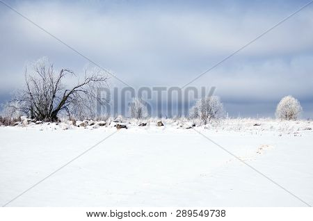 White Winter In The Forest Snowy Landscape