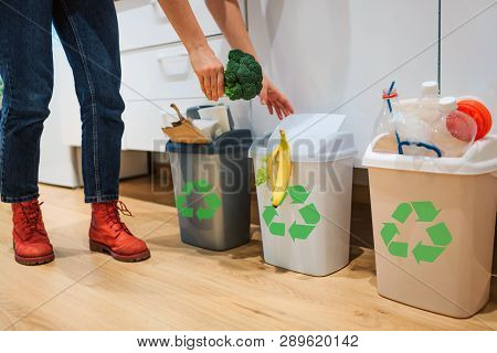 Waste Sorting At Home. Cropped View Of Woman Putting Broccoli In The Garbage Bin. Colorful Trash Bin