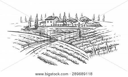 Rural Landscape With Villa, Vine Plantation And Hills. Hand Draw Design Illustration For Wine Label