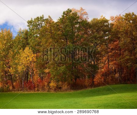 Autumn Landscape With Colorful Trees And Fall Colors And Green Grass At Sunny Autumn Day In Finland.