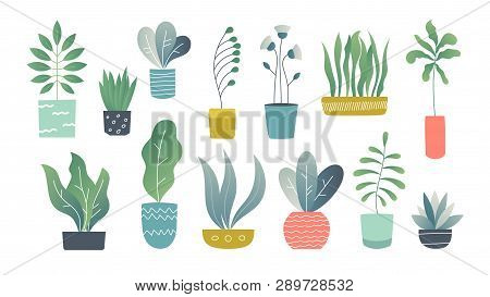 Flat Houseplants. Indoor Doodle Garden Plants, Cute Interior Succulents And House Plants. Hand Drawn