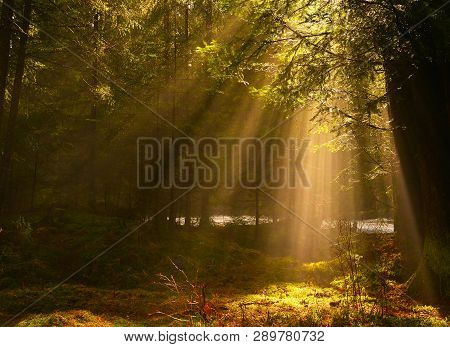 Landscape With Sunbeams In Conifer Spring Forest