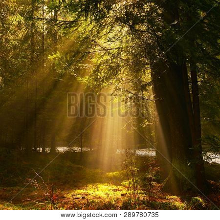View Of Sunrays In The  Backwoods Of Conifer Forest