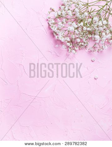 Fresh White Gypsofila  Flowers  On  Pink Textured Background. Top View. Place For Text. Flat Lay. Ve