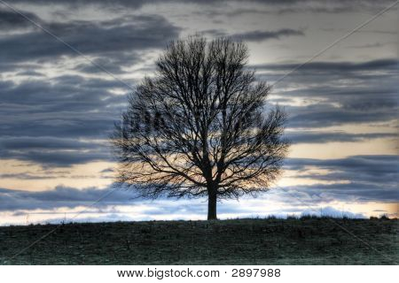 Landscape With Tree Silhouette