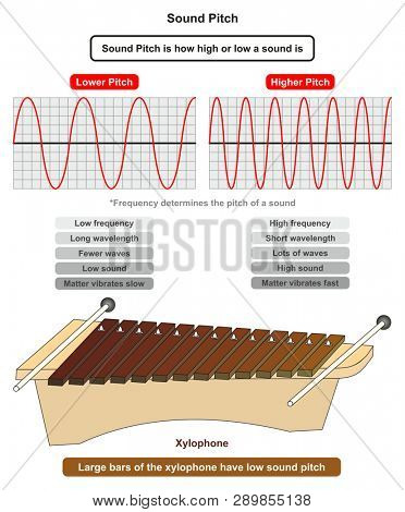 Sound Pitch infographic diagram showing comparison of high and low frequency sound waves also example of xylophone where large bars producing low sound pitch for physics science education