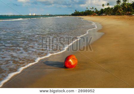 Coco Nut On The Beach