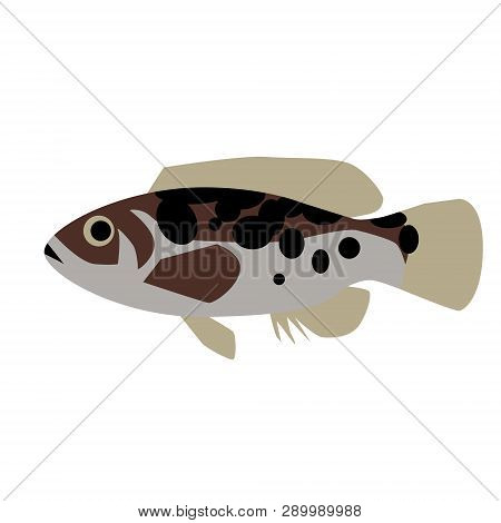 Spotted Fish Flat Style Illustration. Marine And Sea Underwater Fish Series