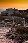 Grouse on the Rocks on a Cold frosty morning  as the Sun Rises in The Peak District Hathersage poster