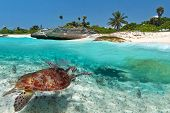 Caribbean Sea scenery with green turtle in Mexico poster